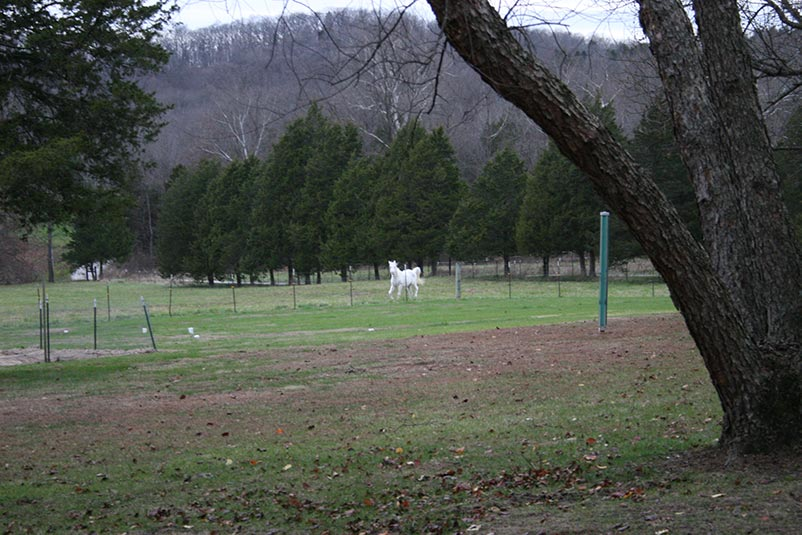 horse running on farm